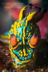 Amazing Nudibranch, Puerto Vallarta Mexico by Alejandro Topete