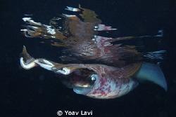 Squid reflections by Yoav Lavi
