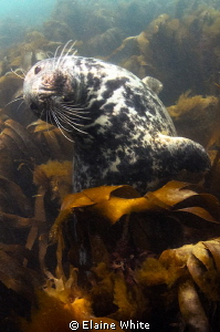 Playing in the kelp by Elaine White