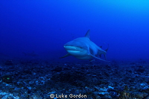 Bull Shark this morning at our dive at Cathedral, 8 or 9 ... by Luke Gordon