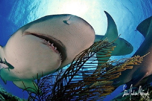 During a recent shark trip I tried a few different angles... by Steven Anderson