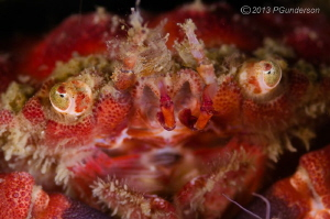 Look into my Eyes!