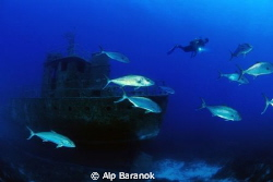 Pınar1 ship wreck and jacks from Bodrum / Turkey by Alp Baranok