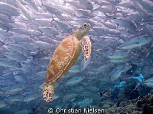 Where else, than Sipadan? Amazing diving :) by Christian Nielsen