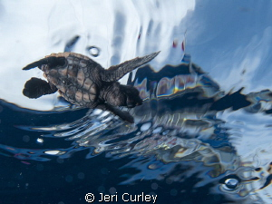 Captured during a sea turtle hatchling release. by Jeri Curley