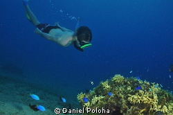 Young freediver approaches a coral rock by Daniel Poloha
