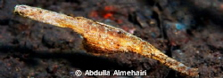 Ghost Pipefish in seraya dive site in Bali by Abdulla Almehairi