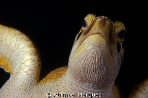 Sea Turtle, from another point of view. by Abimael Márquez