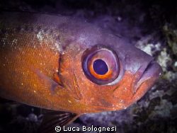 Big eye - Bigeye by Luca Bolognesi