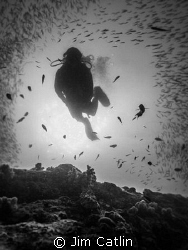 Underwater Halo - A diver appears through the middle of a... by Jim Catlin