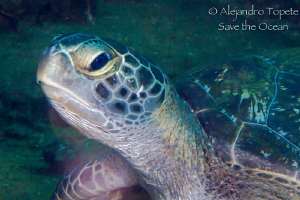 Turtle  in  wreck, La Paz Mexico by Alejandro Topete