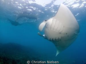 Manta mania on Nusa Penida's Manta Bay by Christian Nielsen