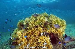 Coral gardens of the Kingdom of Tonga by Daniel Poloha