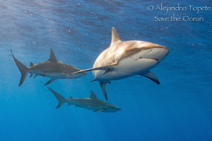 Shark's around, Gardens of the Queen Cuba by Alejandro Topete