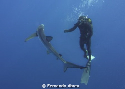 A friend Pico island - Azores by Fernando Abreu