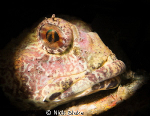 Scorpion fish photographed at Selsey Lifeboat Station - U... by Nick Blake
