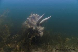 Jurassic Park exists Under The Water !!! Plotki Lake by Marcin Michalak