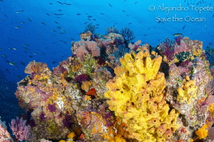 Reef in Morro, Puerto Vallarta México by Alejandro Topete