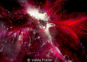 Found a bank covered with urchins.  When the tide turned ... by Valda Fraser