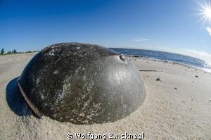 Stranded Horseshoecrab@Slaughter Beach, Delaware by Wolfgang Zwicknagl