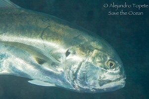 Jack close up, Plataforma Tiburon Mexico