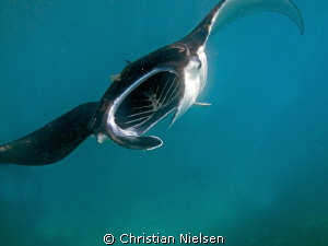 Fantastic snorkeling with feeding manta's on Nusa Penida ... by Christian Nielsen