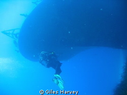 Diver starts to explore the P29 off Malta at Cirkewwa. Or... by Giles Harvey