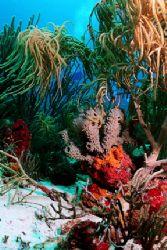 Hard and soft Corals, Aruba. Nikonos V, 20mm lens, Ikelit... by Matthew Shanley