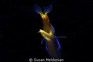 Really Blue shot with snoot and creative side lighting. by Suzan Meldonian