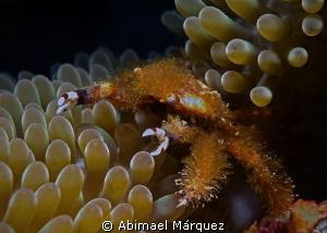 Crab by Abimael Márquez