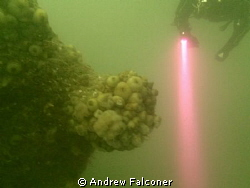 Another shot from recent dive trip to Scapa Flow on Germa... by Andrew Falconer