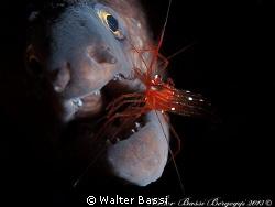 """Dentist"" by Walter Bassi"