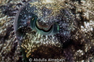 Calamari Eye by Abdulla Almehairi