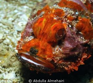 Stone Fish by Abdulla Almehairi