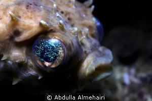 puffer fish by Abdulla Almehairi