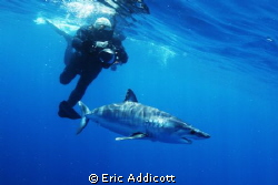 Freediving with mako shark by Eric Addicott
