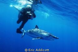 Freediving with mako shark by Eric Addicott