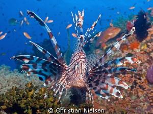 Colors of Komodo. Fantastic diverse diving. by Christian Nielsen