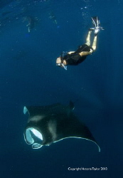 Free diver with Manta Ray, Isla Mujeres Mexico by Victoria Taylor