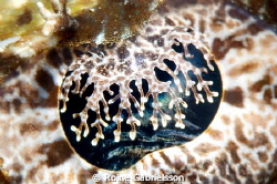 When you get really close to a crocodile fish's eye a who... by Roine Gabrielsson
