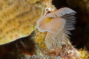 My favorite tube worm. by Patrick Reardon