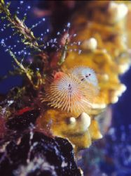 Christmas in the WIT Shoal. Photo taken in the wreck of t... by Candido Gonzalez-alonso