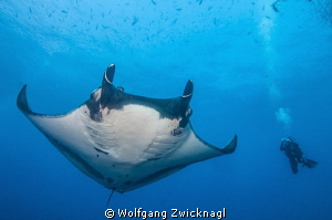 Diving with the giant Mantas of San Benedicto by Wolfgang Zwicknagl