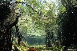 Magic forest... by Nadya Kulagina