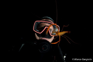 Self Portrait & shrimp, night dive by Marco Gargiulo