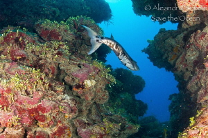 Barracuda scape, Xcalac Mexico by Alejandro Topete