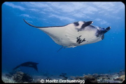 "Manta shot from ""Karang Makassar"" in the Komodo National ... by Moritz Drabusenigg"