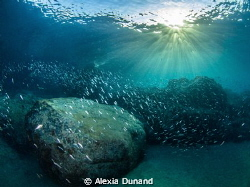 When the sun comes out. Early morning dive! by Alexia Dunand