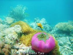Anemone di mare con pesci pagliaccio by Alberto Tais