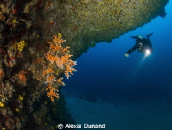 orange coral (Dendrophylia ramea) of Lanzarote, Canary Is... by Alexia Dunand